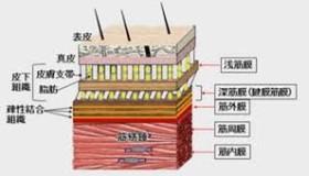 images筋膜